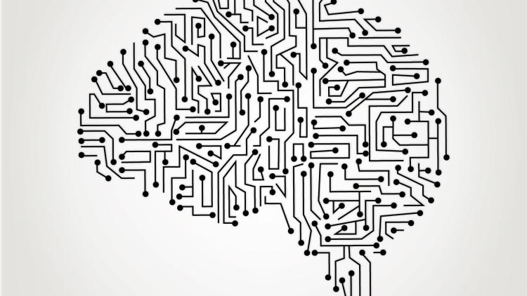 Обработка информации в мозгу: поговорим о центральной и вегетативной нервной системе