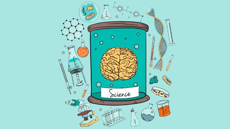 Факты о человеческом мозге