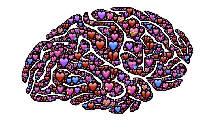Любовь и мозг