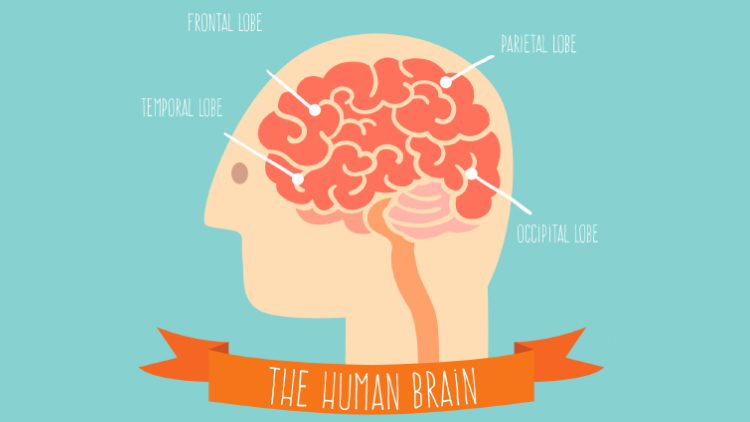 Эйдентическая память: что это такое и можно ли ее развить взрослым людям?