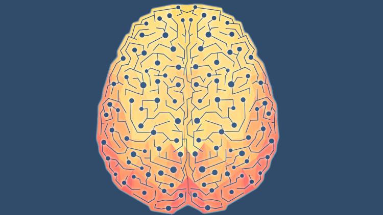 Загадочная штука мозг