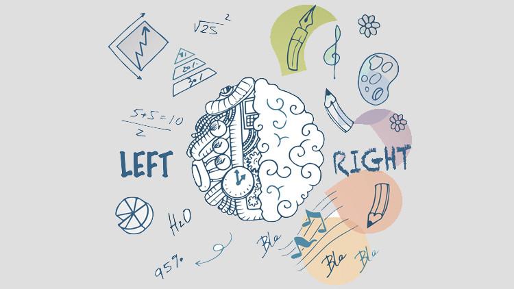 Как развивать правое полушарие мозга?