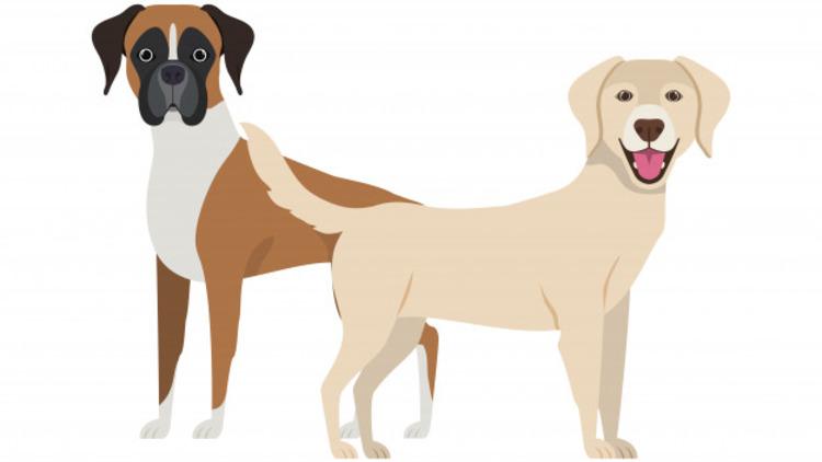 Умеют ли думать собаки?