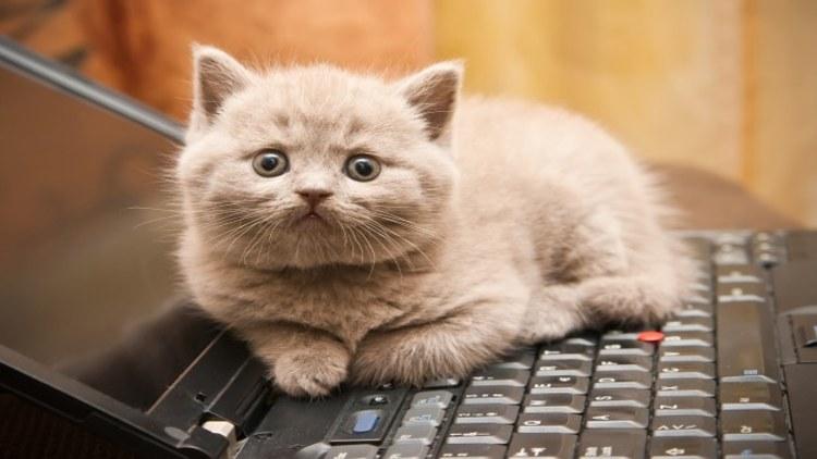 Клавиатура, быстрый набор: как освоить