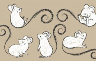 Каждая мышь — индивидуальность