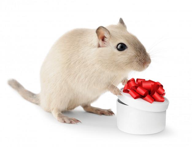 Каждая мышь - индивидуальность