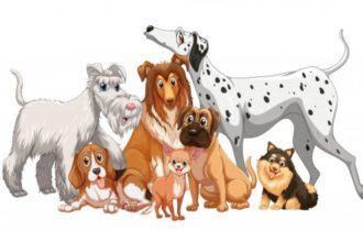 Тест: Ответьте на вопрос, сколько изображено собак? Ваш ментальный возраст